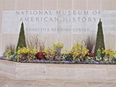 An early spring planting of ornamental Brassicas (kale and mustard), dusty miller, and violas at the Smithsonian.