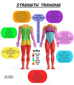leg muscle groups - Google Search