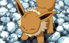 Name: evee Animal: pokèmon Adopted