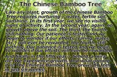 A great lesson from the chinese bamboo tree...