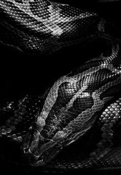 #LGLimitlessDesign #Contest Beautiful black snake. Texture. Chrome. #snakeinspiration