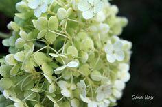 photo de fleur Photos, Fruit, Flowers, Pictures, Photographs, Cake Smash Pictures
