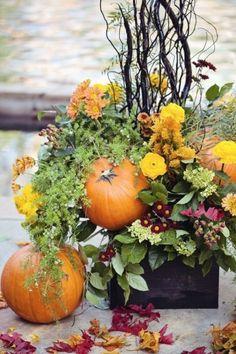Zucche e fiori gialli