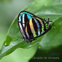 butterfly -- isn't it beautiful? Beautiful Bugs, Beautiful Butterflies, Moth Caterpillar, Butterfly Pictures, Bugs And Insects, Chenille, Tiger Stripes, Butterfly Wings, Rainbow Butterfly