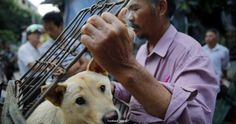 China, regardless of objections, begins selling dog meat (Photo Gallery)  #DogsinChina #dogs #animals #Peta
