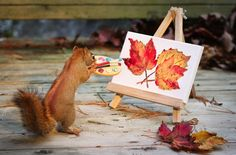 {the squirrel artiste} Photographer Nancy Rose builds tiny sets in her back yard for squirrels to interact with.