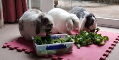 Do you know what makes up a healthy rabbit diet? 🐇85% feeding hay or grass 🐇10% greens 🐇5% nuggets Check out which greens are safe on our website Rabbit Diet, Rabbit Eating, Radish Greens, Green Lettuce, Wild Rabbit, Willow Leaf, Carrot Top, Bunny Rabbits, Different Recipes