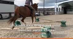 Do not you have any ideas for riding? Here are 5 exercises . Do not you have any ideas for riding? Percheron Horses, Standardbred Horse, Mare Horse, Andalusian Horse, Horseback Riding Tips, Horse Training, Horse Care, Easy Workouts, Beautiful Horses