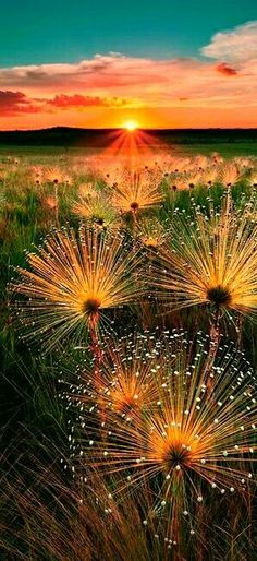 Dewdrops and sunset who could ask for more perfect setting? #LandscapeSunset