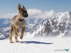 Snowbird's new avalanch dog