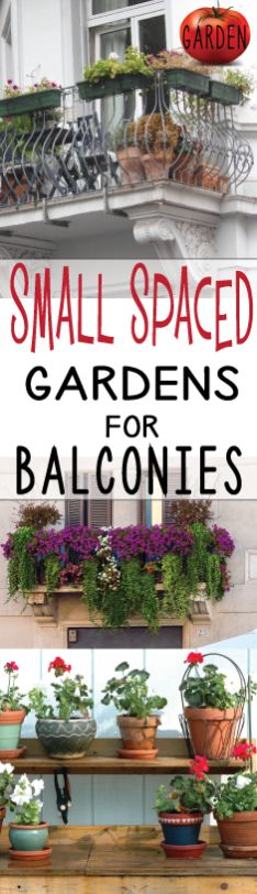 Learn 5 of the best tips to making your balcony and apartment gardens thrive. Click the pin to learn what most people...