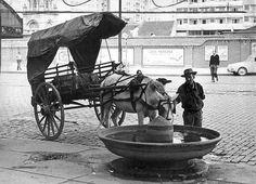 Antigo bebedouro para animais no Parque da Luz, foto do ano de 1966 - Sao Paulo