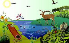 Gejala Alam Biotik dan Abiotik TERLENGKAP http://ift.tt/2crHifg