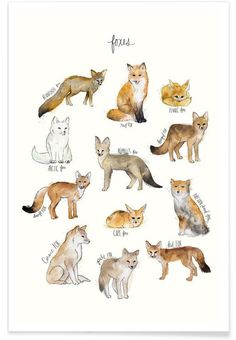 Foxes als Premium Poster von Amy Hamilton | JUNIQE                                                                                                                                                     Mehr