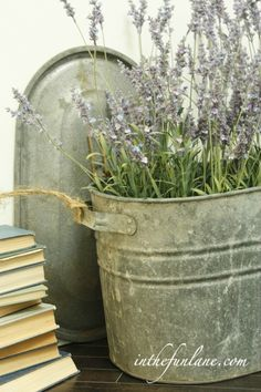 lavender planted in an old tub