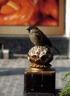 Random shot on the streets of Brasov. Bird Feeders, Random, Outdoor Decor, Photography, Home Decor, Photograph, Decoration Home, Room Decor, Fotografie