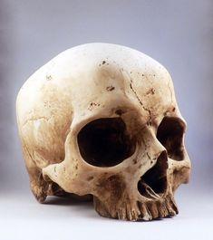 Skull Reference, Anatomy Reference, Figure Reference, Human Skull, Human Skeleton, Real Skull, Inside Art, Totenkopf Tattoos, Skateboard Design