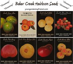 Giveaway: Baker Creek Heirloom Seeds!!!  http://yourgardeningfriend.com/2013/04/25/giveaway-baker-creek-heirloom-seeds/?utm_source=feedburner_medium=email_campaign=Feed%3A+Yourgardeningfriendcom+%28Your+Gardening+Friend%29