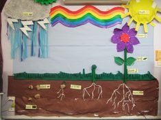 Plant growth classroom display photo - Photo gallery - SparkleBox
