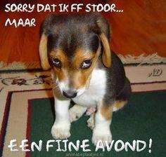 Facebook-plaatjes van fijne avond, gezellige avond met grappige dierenplaatjes van Animatieplaatjes.nl