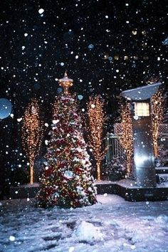 decorating landscape design front yard clearance christmas lights decorated white christmas trees 1024x768 outside l outside lighted christmas decor