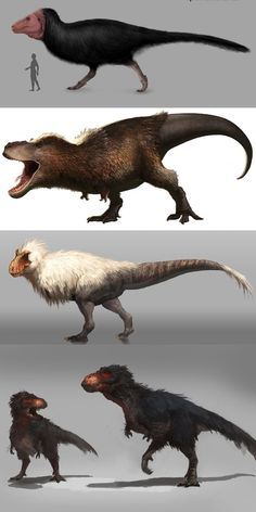 The Tyrannosaurus Rex had feathers and probably looked something like one of these. The Tyrannosaurus Rex had feathers and probably looked something like one of these. Prehistoric Wildlife, Prehistoric Dinosaurs, Prehistoric World, Prehistoric Creatures, Mythical Creatures, Dinosaur Drawing, Dinosaur Art, Dinosaur Fossils, Dinosaur Crafts