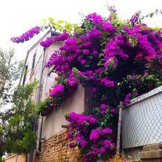 Nydelige blomster i Kroatia. Følte for litt sommerminner i høstmørket. #blomster #flowers #kroatia #sommer #summer