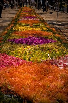 Flower Carpet, Madeira, Portugal  #donamaro