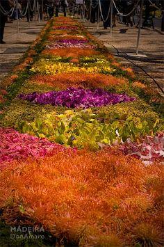 Flower Carpet, Madeira, Portugal  #donamaro