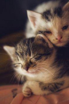 . / Kittens,