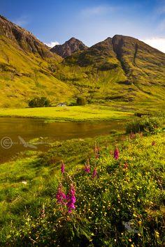 Loch Achtriochtan . Glen Coe . Summer Flowers, evening light. North West Scotland.