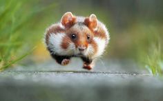 The best entries in the inaugural Comedy Wildlife Photography Awards have been named