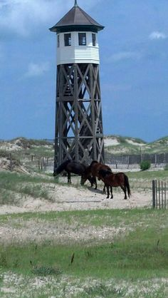 Corolla wild horses with the old Coast Guard station near Swan Beach
