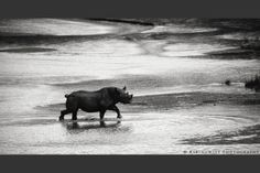 South African-born fine art photographer, Adam Rabinowitz, featuring his collection of fine art prints on Rabinowitz Photography. My Photos, Moose Art, Photography, Animals, Black, Photograph, Animales, Animaux, Black People