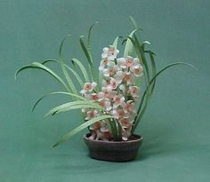 Orchid # miniatures, flower