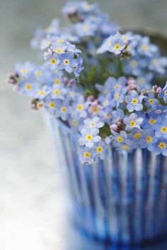 Blue forget-me-nots with yellow centers