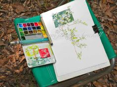 Sketching in Nature: Sparkleberry in Spring