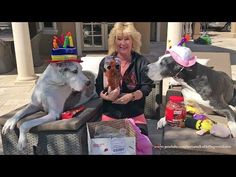 Happy Great Dane Open Birthday Gifts from You Tube Friend - YouTube