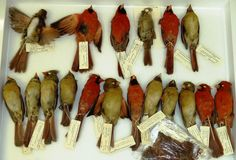 ornithology collections -