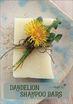 Dandelion Shampoo Bars Recipe - this sunny palm-free soap recipe is infused with dandelion flowers and scented with a cheerful blend of citrus essential oils. Directions are given for both hot process and cold process methods. - Crafts Are Fun Diy Shampoo, Homemade Shampoo, Shampoo Bar, Homemade Conditioner, Citrus Essential Oil, Essential Oils, Dandelion Recipes, Belleza Diy, Diy Beauté