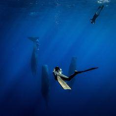La imagen puede contener: nadar y agua