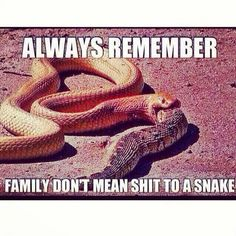 Family dnt mean shit to snakes