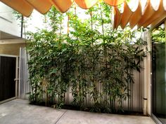 #courtyard #bamboo #themews #atwatervillage