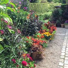 Hello ... From one of my potting gardens #flowers #blomster #garden #clausdalby