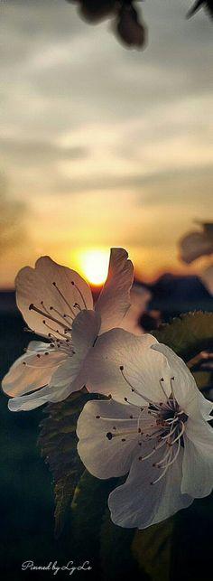 sunset #nature