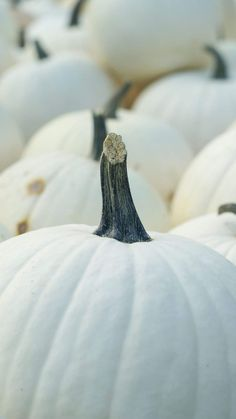 White pumpkins are Cucurbita winter squash varieties with naturally white-color rinds. Some white pumpkin cultivars are mini-sized, while others can make giant Jack-O-Lanterns! Here are 30+ of the most popular white pumpkin varieties. Mini Pumpkins, White Pumpkins, Fall Pumpkins, Winter Squash Varieties, Pumpkin Varieties, Pumpkin Moon, Pumpkin Lights, Harvest Decorations, Halloween Decorations