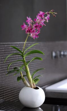 Thanks to the indirect light and high humidity in the bathroom, the orchid feels at home here!