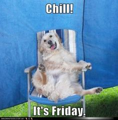 funny dog pictures - Chill! It's Friday.