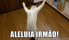 meme-gato-aleluia