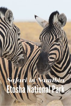 Safari in Etosha National Park, Namibia #Namibia #Etosha #Safari #Africa #Zebra